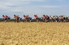 Il Peloton - Tour de France 2017 immagini stock libere da diritti