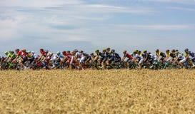 Il Peloton - Tour de France 2017 fotografia stock libera da diritti