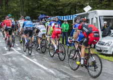 Il Peloton - Tour de France 2014 Fotografia Stock Libera da Diritti