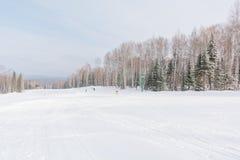 Il pendio del pattino Pendio dello sci nella bella foresta di inverno della foresta nel taiga Alberi sotto la neve Pista per gli  Fotografie Stock Libere da Diritti