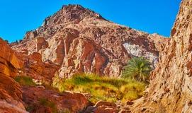 Il pendio di montagna colorato se canyon di Sinai, Egitto fotografia stock