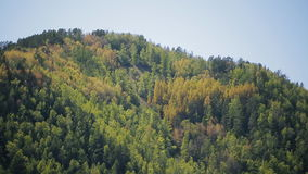 Il pendio tremendo della roccia è coperto di foresta densa ricca stock footage