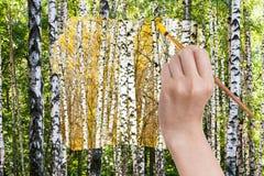 Il pennello dipinge il boschetto giallo della betulla di autunno Immagine Stock