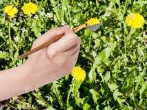 Il pennello dipinge il fiore giallo del dente di leone su prato inglese Fotografia Stock