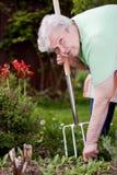 Il pensionato taglia le erbacce a pezzi nel giardino Fotografia Stock Libera da Diritti
