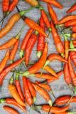 Il peperoncino rosso rosso crudo sulla tavola di legno prepara l'elasticità dell'alimento un gusto piccante fotografia stock libera da diritti