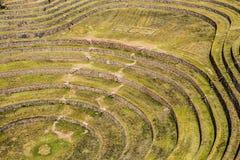 Il Perù, Moray, terrazzi antichi della circolare di inca. Il probabile là è il laboratorio di inche dell'agricoltura Immagini Stock