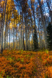 Il percorso alla foresta Fotografie Stock