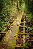 Il percorso alle foreste di Bornean Fotografie Stock