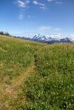 Il percorso attraverso i prati alpini conduce alle viste del Mt Shuksan Immagine Stock