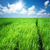 Il percorso attraverso l'erba alta su un campo verde Fotografie Stock