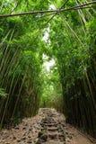 Il percorso attraverso la foresta di bambù densa, conducente a Waimoku famoso cade Traccia popolare di Pipiwai nel parco nazional Immagine Stock Libera da Diritti