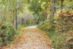 Il percorso con le foglie di autunno gialle allunga attraverso le foreste nella riserva Spreewald di biosfera in Germania Autumn  fotografie stock