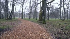 Il percorso con le foglie di autunno in Kadriorg parcheggia di mattina stock footage