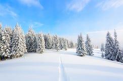 Il percorso conduce alla foresta nevosa Immagine Stock