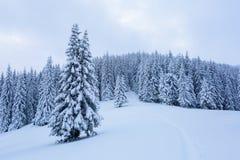 Il percorso conduce alla foresta nevosa Immagini Stock Libere da Diritti