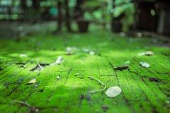 Il percorso dei mattoni coperto di muschio e di foglia verdi fotografia stock