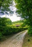 Il percorso del ciottolo in foresta con gli alberi della capanna rimuove i cieli che si aprono dentro Fotografia Stock Libera da Diritti