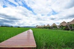 Il percorso del ponte di legno nel giacimento e nel fondo del riso è capanne Fotografie Stock