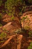 Il percorso del Roussillon vicino ocraceo, Francia Immagine Stock