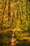 Il percorso della foresta fotografia stock