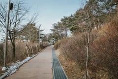 Il percorso della passeggiata e la bella natura della Corea alla collina completano durante l'inverno Immagini Stock