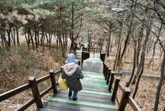 Il percorso della passeggiata e la bella natura della Corea alla collina completano durante la stagione invernale per il concetto Immagine Stock