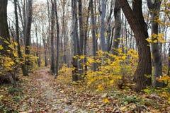 Il percorso di autunno Immagine Stock Libera da Diritti