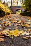 Il percorso di autunno conduce al ponte Immagine Stock Libera da Diritti