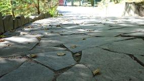 Il percorso di pietra della passeggiata del blocco nel parco con il fondo dell'erba verde Lastre per pavimentazione con un'erba C fotografie stock libere da diritti
