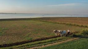 Il percorso di vita del pescatore e l'agricoltore al fiume parteggiano in Amarapura Mandalay, Myanmar con la luce meravigliosa de Immagine Stock Libera da Diritti