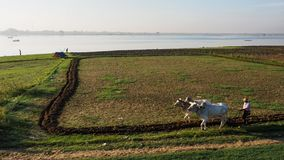 Il percorso di vita del pescatore e l'agricoltore al fiume parteggiano in Amarapura Mandalay, Myanmar con la luce meravigliosa de Immagini Stock Libere da Diritti