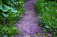 Il percorso fra la pianta Immagine Stock