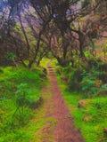 Il percorso giusto che conduce in una terra mistica immagine stock