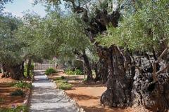 Il percorso nel giardino di Gethsemane fotografie stock libere da diritti