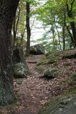 Il percorso nel legno Immagini Stock