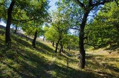 Il percorso nella foresta decidua Fotografia Stock Libera da Diritti