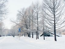 Il percorso nella foresta nevosa Immagini Stock Libere da Diritti