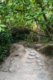 Il percorso nella giungla Immagine Stock Libera da Diritti