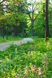 Il percorso nella sosta. Il paesaggio di mattina Immagine Stock Libera da Diritti