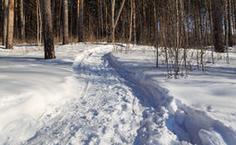 Il percorso nella strada soleggiata della neve dell'inverno della foresta ha rotolato Immagine Stock