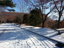 Il percorso o il vicolo o il passaggio pedonale vuoto in viale di legno con due file degli alberi parteggia per neve da entrambi  Fotografie Stock Libere da Diritti