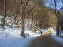 Il percorso o il vicolo vuoto in viale di legno con due file degli alberi parteggia per neve da entrambi i lati Immagine Stock Libera da Diritti