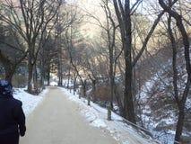 Il percorso o il vicolo vuoto in viale di legno con due file degli alberi parteggia per neve da entrambi i lati Fotografia Stock Libera da Diritti