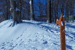 Il percorso scala in salita nella foresta dell'inverno Immagine Stock Libera da Diritti