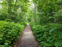 Il percorso verde al parco di stato di Wisconsin fotografie stock libere da diritti