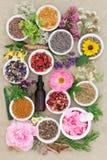 Il perforatum di erbe di Medicine Fotografie Stock Libere da Diritti