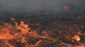 Il pericolo di incendio forestale - fumo e fuoco video d archivio