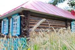 Il periodo del raccolto di grano Fotografia Stock