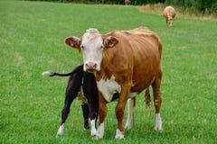 Il periodo di allattamento al seno Immagine Stock Libera da Diritti